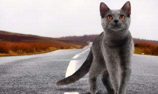 Blockchain and £80 000 Crypto – Cats